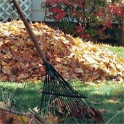 Collect autumn foliage for composting