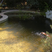 Pool conversion to aquaculture and fish pond