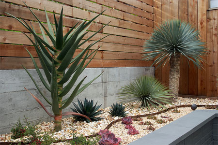 Garden Ideas In South Africa Home dzine garden ideas xeriscaping