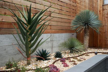 Home Dzine Garden Foolproof Gardens For Those That Hate Gardening