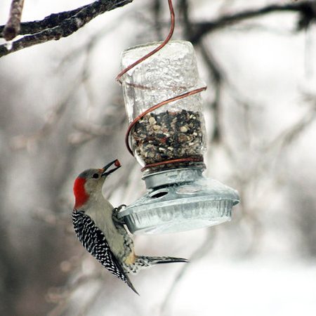mason jar ideas bird feeder