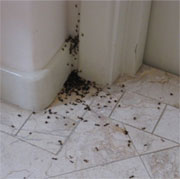Bothered by ants or roaches?