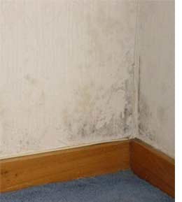 Home Dzine Home Diy How To Deal With Damp Or Mould