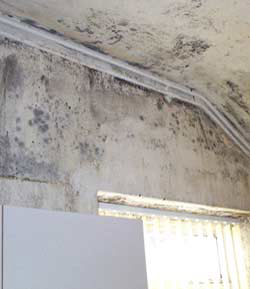 How to deal with damp or mould