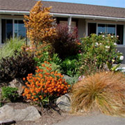 Plant ornamental grasses for a water wise garden