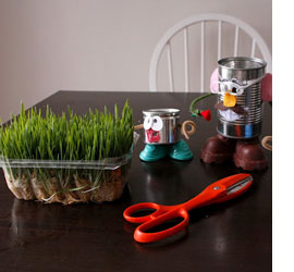 Wheat grass projects for kids