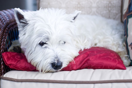 Dealing with pet odours is not a difficult thing to overcome,