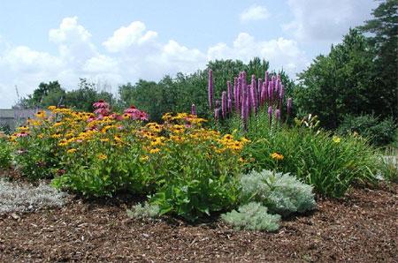 HOME DZINE Garden Ideas Xeriscaping for a water wise garden design