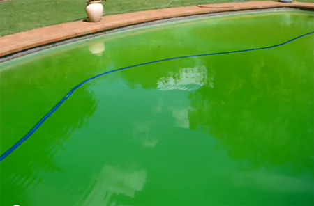 Home dzine garden what to do when your pool goes green - How long after pool shock before swim ...
