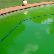 How to remedy algae or a green pool