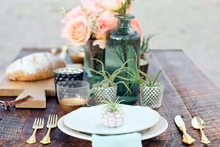 air plant table decor