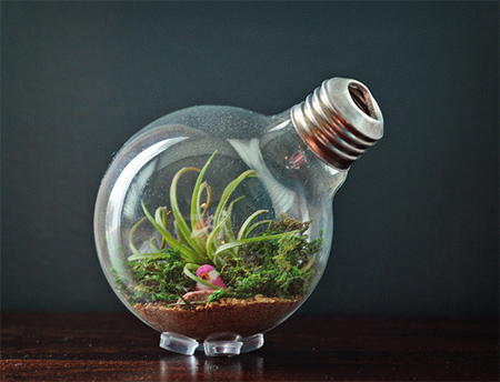 Home Dzine Craft Ideas Make A Light Bulb Terrarium