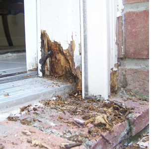 Home dzine home diy how to repair damaged wood and treat - Refinishing damaged wood exterior doors ...