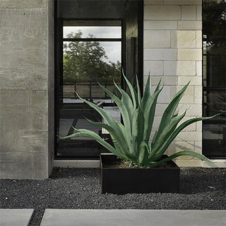 HOME DZINE Garden Aloe vera A plant that is water wise