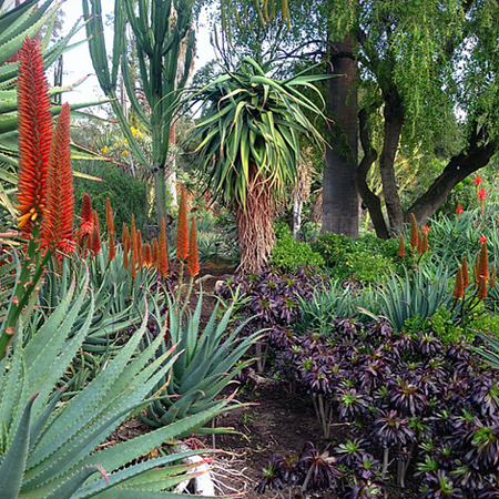 Home dzine garden aloe vera a plant that is water wise for South african garden designs