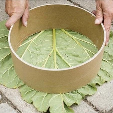 stepping stone rhubarb leaf design concrete diy
