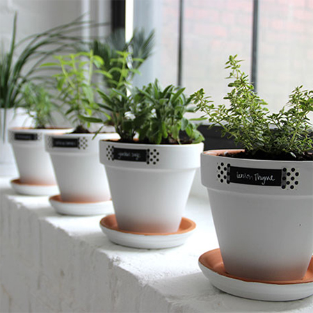 chalkboard paint plant pots filled with herbs