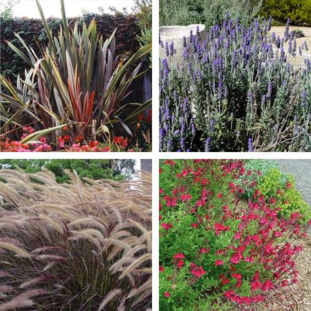 Home Dzine Garden Ideas Design A Low Maintenance Garden