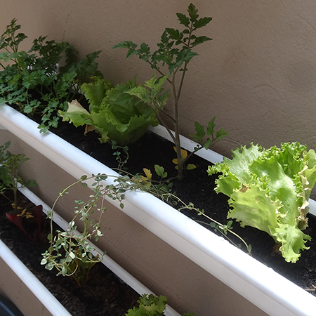 make build vegetable or herb gutter garden adding cherry tomatoes and lettuc
