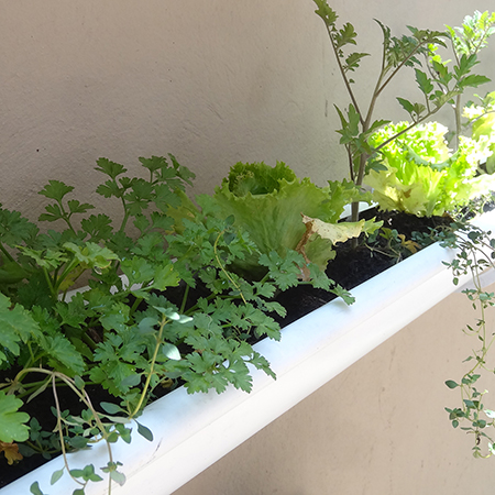 make build vegetable or herb gutter garden adding parsle and basil