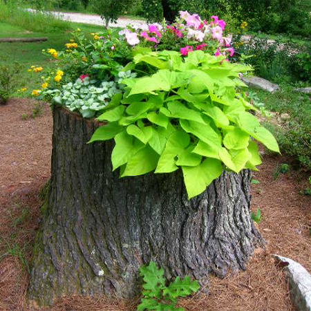 What to do with a tree stump planter for colourful flowers