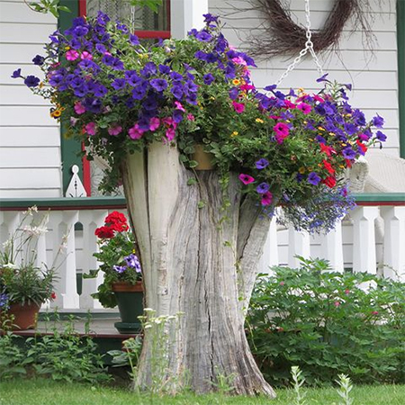 What to do with a tree stump planter for flowers