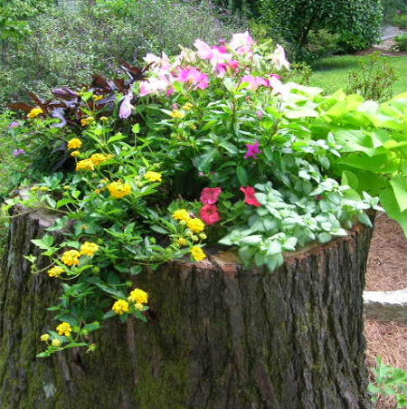 What to do with a tree stump plant up with flowers
