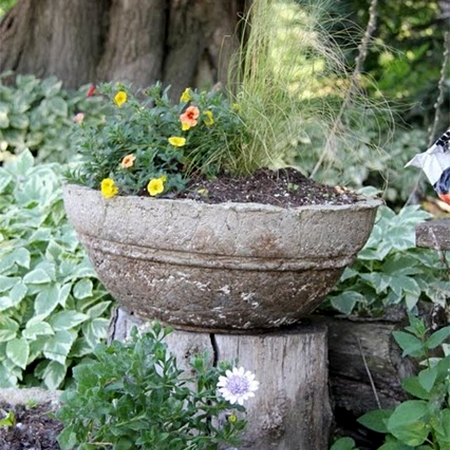 What to do with a tree stump use as a plant stand