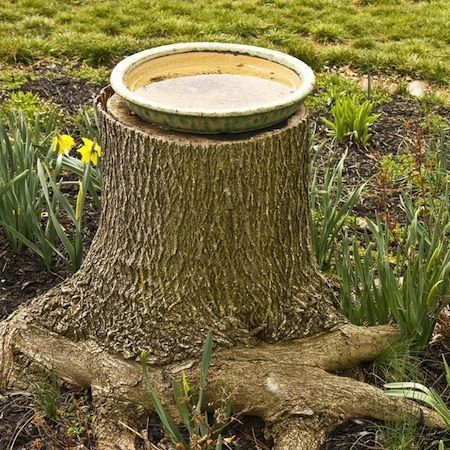 What to do with a tree stump birds water bath