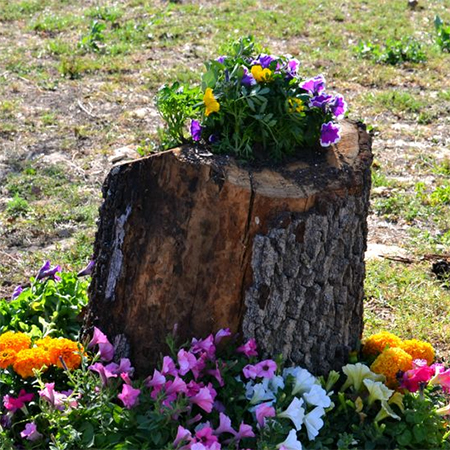 What to do with a tree stump fill with plants