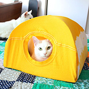 DIY kitty tent