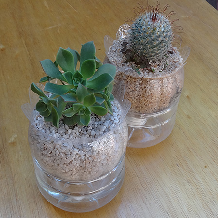 Plastic juice bottles turned into self-watering plant holders with cacti