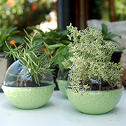 Recycled plastic herb pots