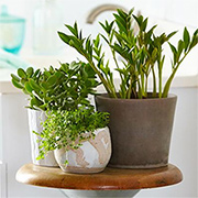 Plants suitable for a bathroom