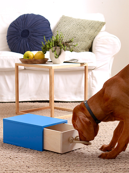Intelligent toy for smart dogs