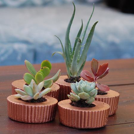 Concrete cupcake planters for colourful succulents