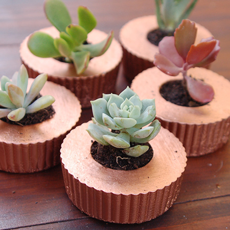 Concrete cupcake planters for succulents