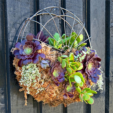An old fan becomes a wall planter filled with a wonderfully colourful selection of succulents. Make your own fan planter for a garden or patio.