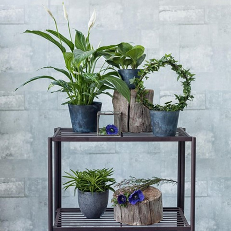 Most air purifying plants require regular watering, so be sure to keep them happy as they clean the air. Plant also benefit from being dusted off to remove traces of the toxic particles. Gently wipe with a soft, damp cloth or set the plant in the shower to rinse off the dust.