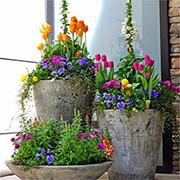 Water Wise Container Gardens
