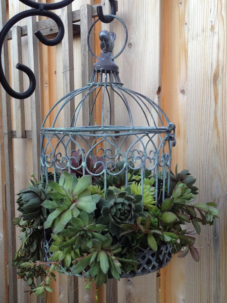 But before you rush out to buy materials to make a plant hanger, consider items that you may already have. A steel birdhouse makes a wonderful hanging planter for assorted succulents.