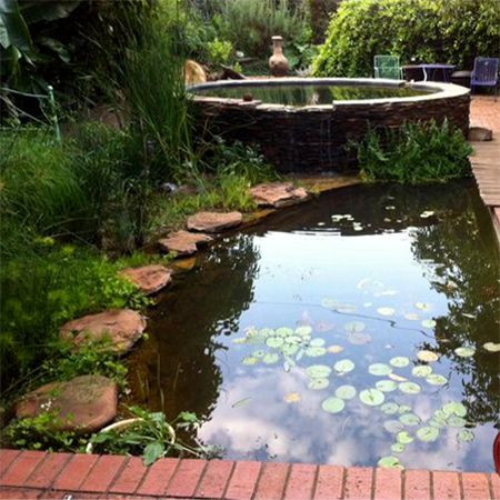 Home dzine garden ideas wetland pool conversion for Swimming pool conversion