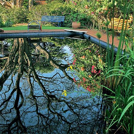 Home Dzine Garden Ideas Wetland Pool Conversion