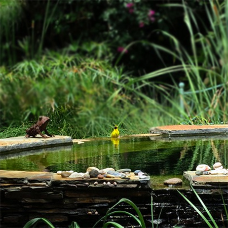 Home dzine garden ideas wetland pool conversion for Garden conversion
