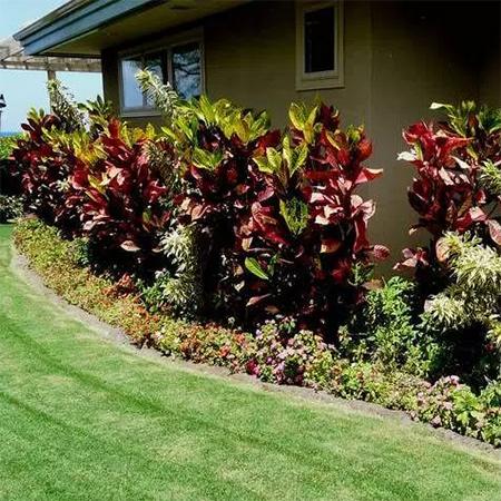 Home dzine garden ideas diy concrete edging for Easy to maintain garden