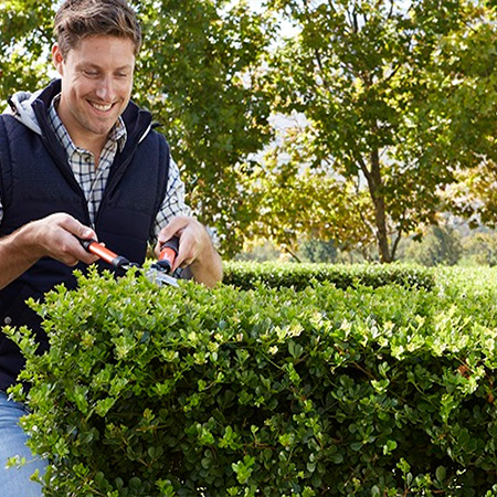 Time to prune your shrubs and trees
