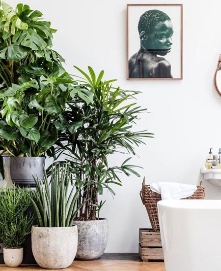 HOME-DZINE | Every home needs a pot plant or two