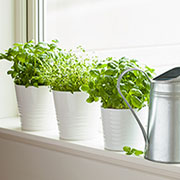 Benefits of an indoor herb garden