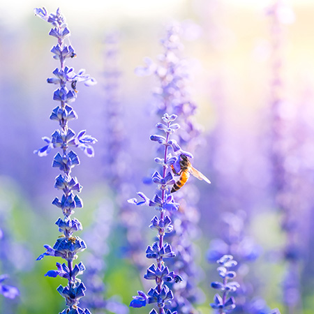 Recent research tells us that natural homes for bees are becoming less in abundance. Which means that planting a bee-friendly garden should become a priority when planning one.