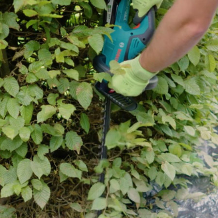 Trimming your hedges should begin at the bottom